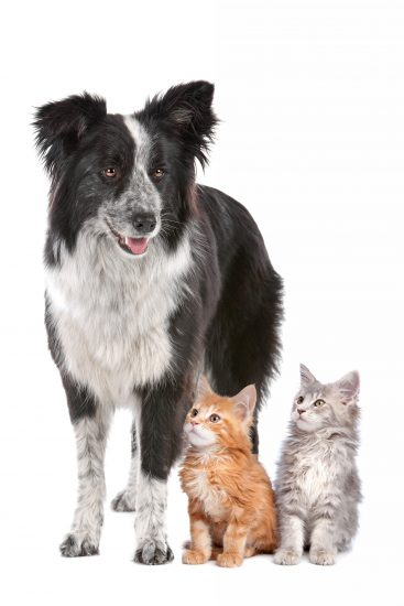 dog-and-kittens-W8A7DEQ-1